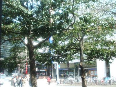博多 バスのヤ窓から2.JPG